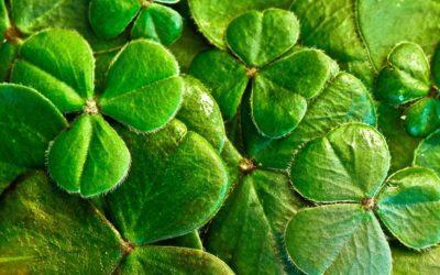 Jaro 2021 – Na praxi do Irska